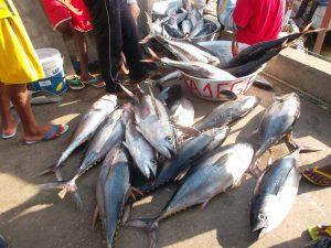 Les poissons au port de pêche de Cotonou